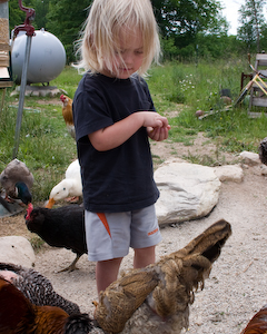Feeding Chickens at the Hands On Art Studio