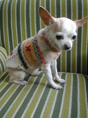 dog sweater made from old sweaters