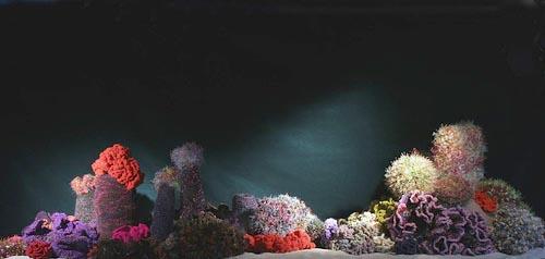 hyperbolic crochet reef