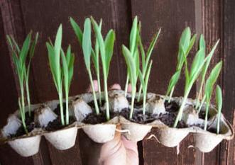 egg-carton-planter