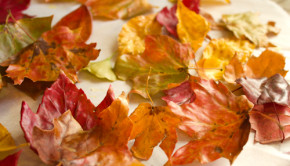 Take the ephemeral beauty of autumn leaves and make it last forever when you preserve leaves with the one simple, natural ingredient that is pure beeswax.