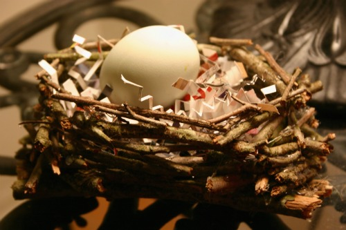 egg in bird nest