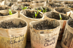 Make Upcycled Pots for Seedlings