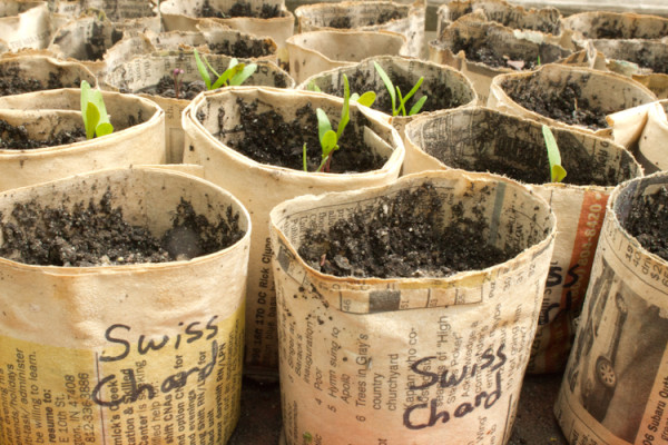 Make Your Own Natural or Recycled DIY Pots for Plants and Seedlings. DIY Pots for Plants and Seedlings Using Natural or Recycled Materials