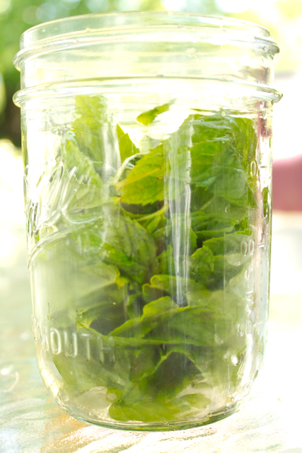 Making homemade mint tea is an easy way to preserve the mint from your garden!