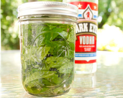 Read on to learn how to make as much of your own mint extract as you could ever want with our nearly effortless method!