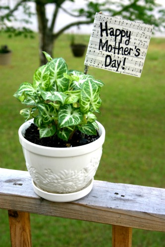 "Mother's Day Plant ""Flag"""