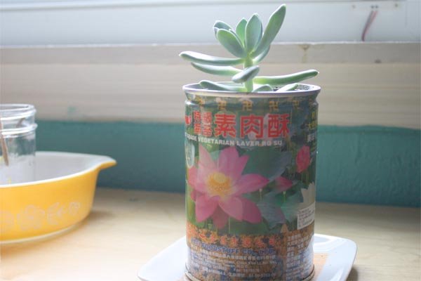 tin can planter done
