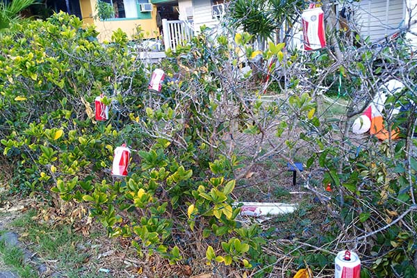 soda can ornaments