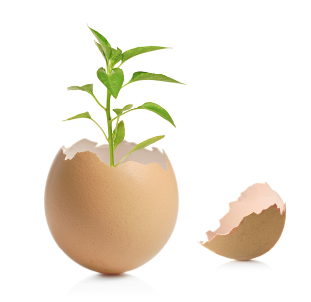 seedling in an eggshell image via Shutterstock
