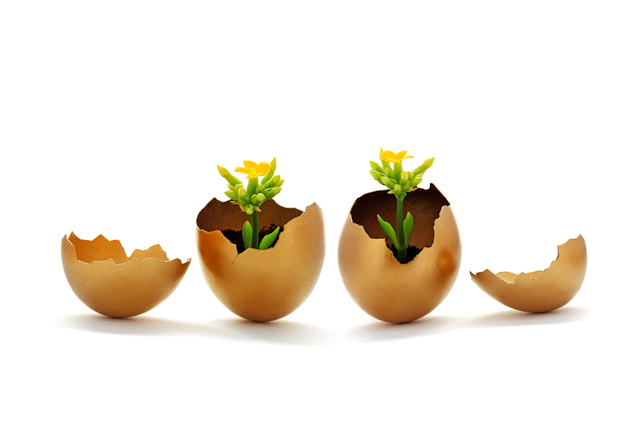 seedlings in eggshellsl image via Shutterstock