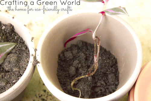 How to Propagate the Wandering Jew