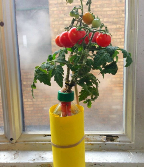 DIY Water Bottle Garden
