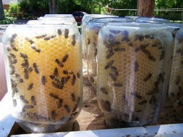 DIY Beehive in Mason Jars