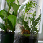 DIY Terrariums: Miniature Rainforest