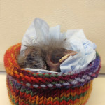 Baby Bird in a Knitted Pouch