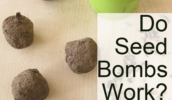 Do Seed Bombs Work?