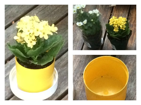 Don't toss the caps from your bottle of laundry detergent and spray paint! Turn them into mini DIY flower pots instead!