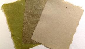 Invasive Paper Project via Megan Heeres