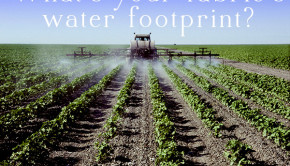 Cotton is a thirsty and chemical-intensive crop. Here's how to choose fabric for your next project that reduce your fabric water footprint.