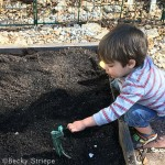 My three-year-old and I planted a ton of green garlic, and you can too! Here's how to plant, harvest, and eat green garlic this spring.