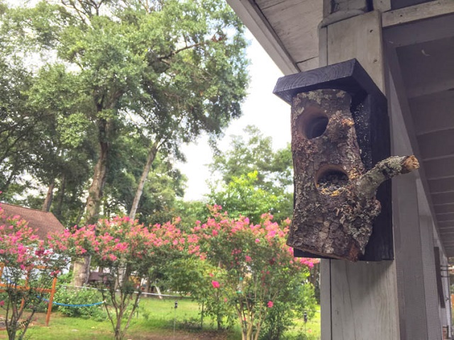 Have summer storms done a number on the big trees where you live? Grab a large, fallen branch, and turn it into a cool DIY bird feeder!