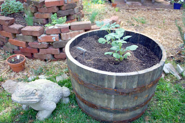 Upcycled Planters - Whiskey Barrel