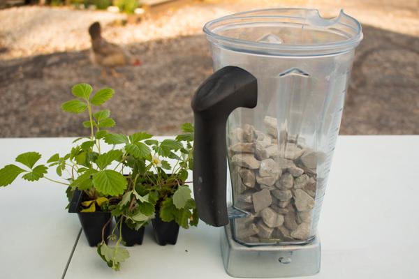 Terrarium Diy Turn An Old Soda Bottle Into A Miniature Rainforest
