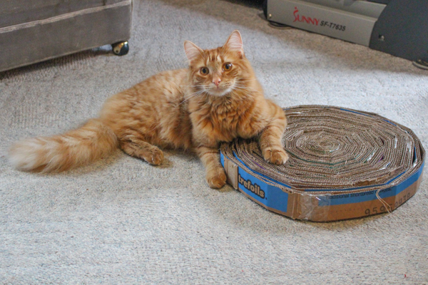 cat with cardboard