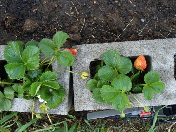 Cinderblock Raised Garden via Retro Hip Mama