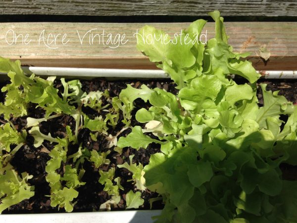 Gutter Garden from One Acre Vintage Homestead